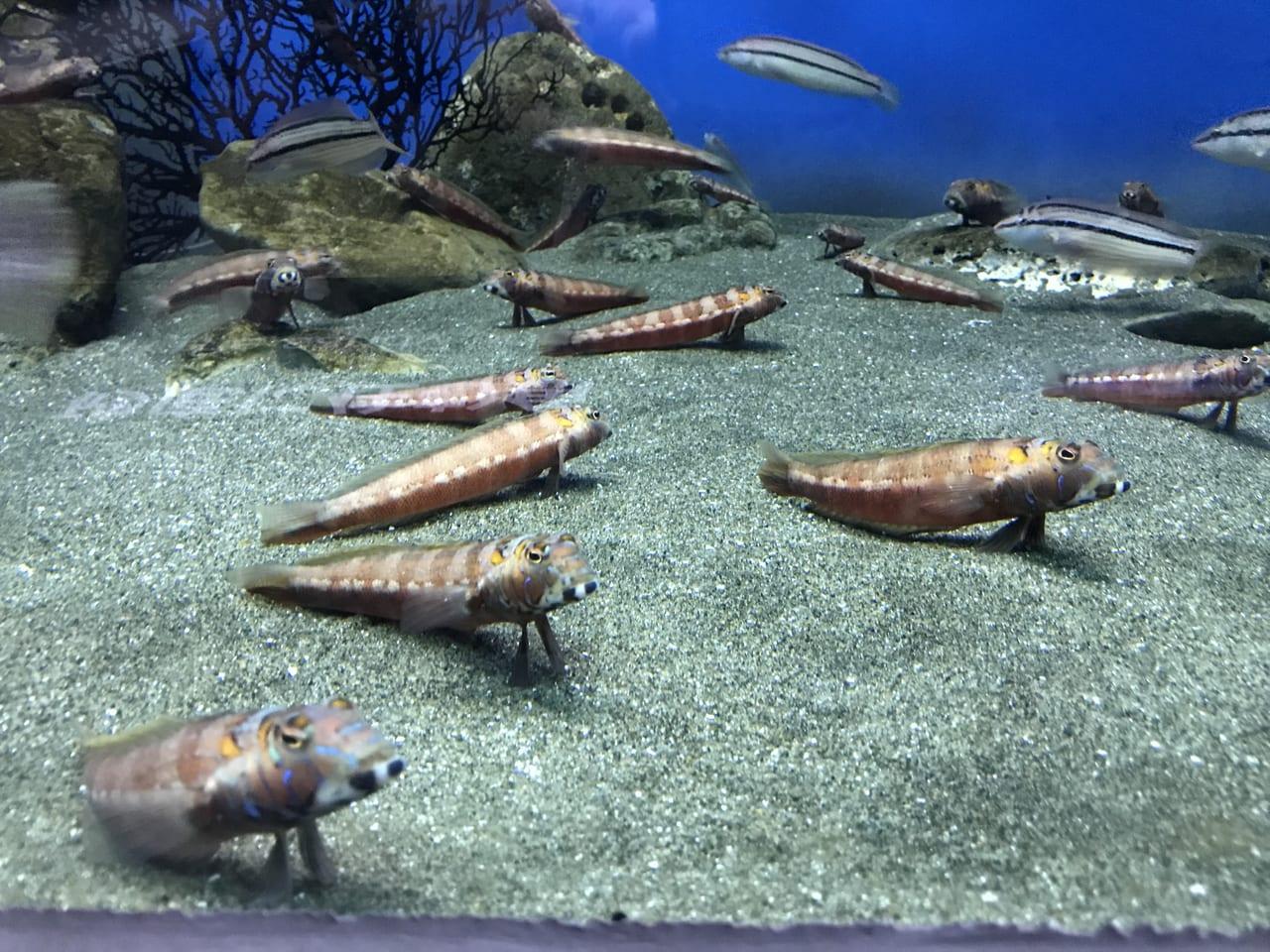 マリンパーク魚